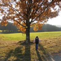 Gemeindebilder Aicha vorm Wald